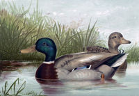 perfact 36x24 oil painting handpainted on canvas Ducks in Pond