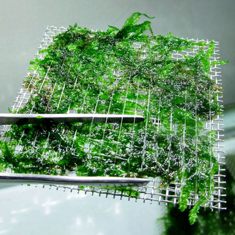 Aquarium Fish Tank Aquascape Landscape Aquatic Live Plant Water Grass Griftwood Floating Crystal Moss Line Fern String Wire Tie