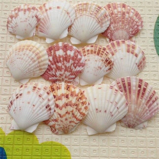 seashell8