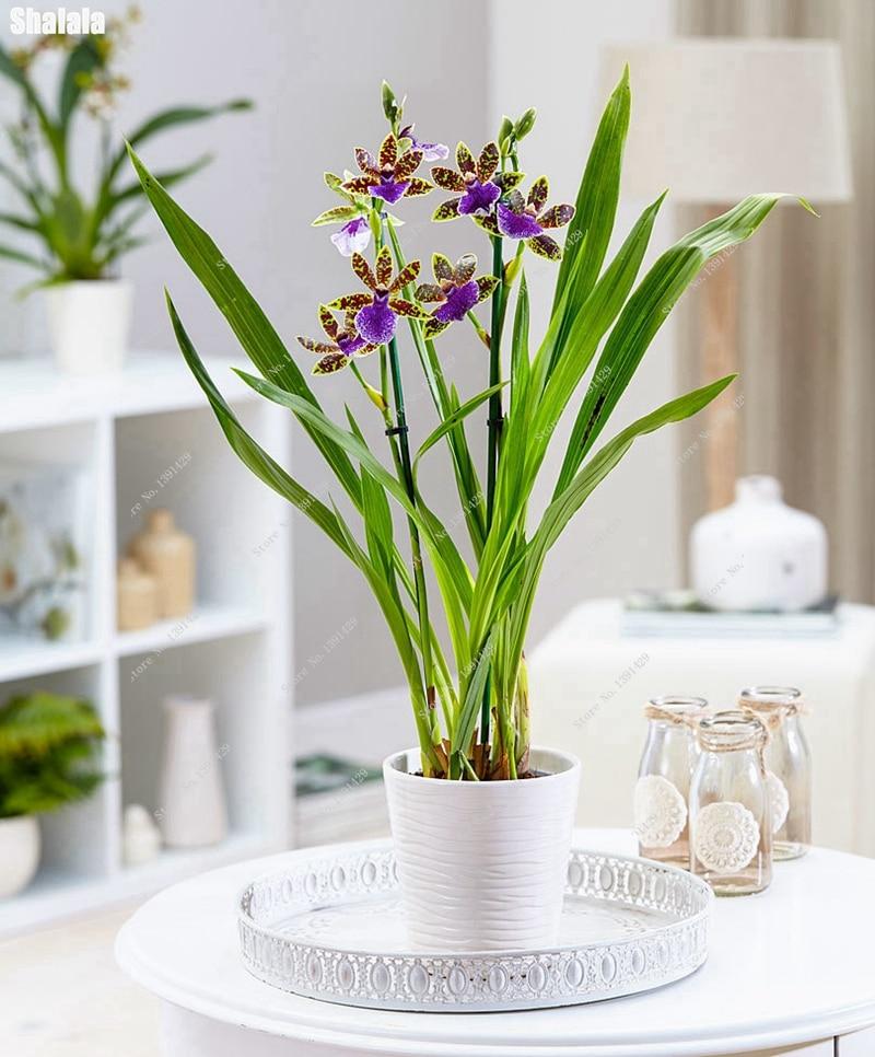 Increíble Uñas Flores Plantación Imagen - Ideas Para Esmaltes ...