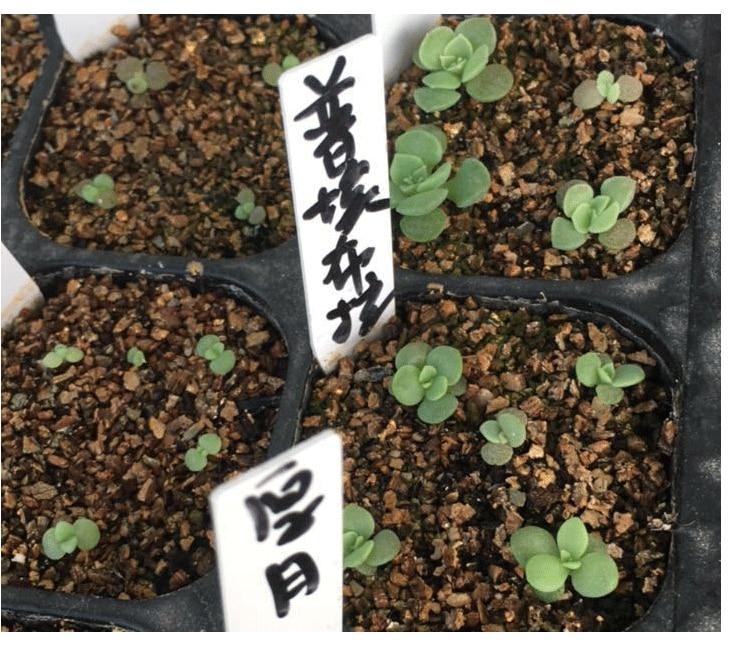 Пакет 6 Тұқымдық Planters, Тұқымдық - Бақша өнімдері - фото 4