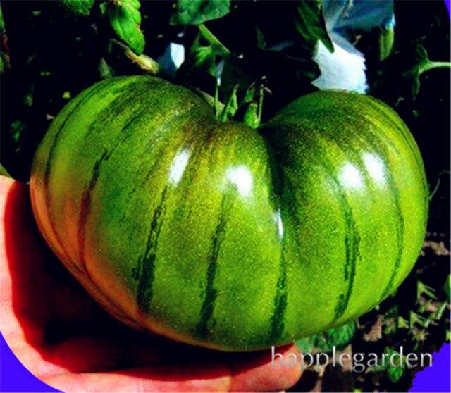 Spedizione gratuita Rare Gaint di pomodoro bonsai, frutta e Verdura A Casa Giardino Piante di pomodoro In Vaso Bonsai Balcone piantare 100 pz/borsa