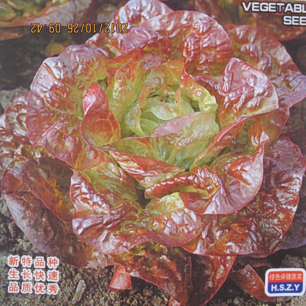 Hamburg Butter Lettuce Bonsai 200pcs