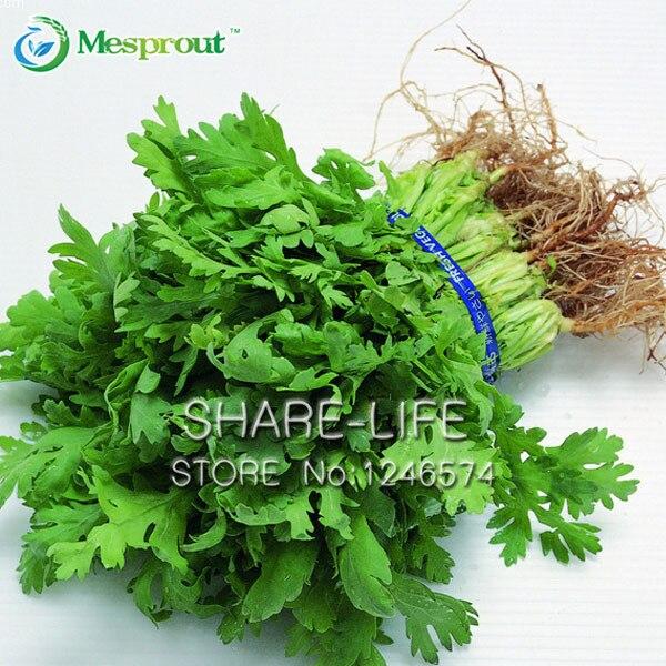30 koriander bonsai cilantro rig smag, god Fordele ved madlavning af urter DIY grøntsag fra haven bonsai god smag, velsmagende sund