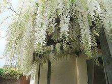 Free shipping purple wisteria flower seeds,wisteria flower,chinese wisteria bonsai – 20 pcs seeds