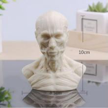 wholesale 10cm Human muscle head mannequin carving, still life drawing, reference skull model, artistic bust,landscaping M01009
