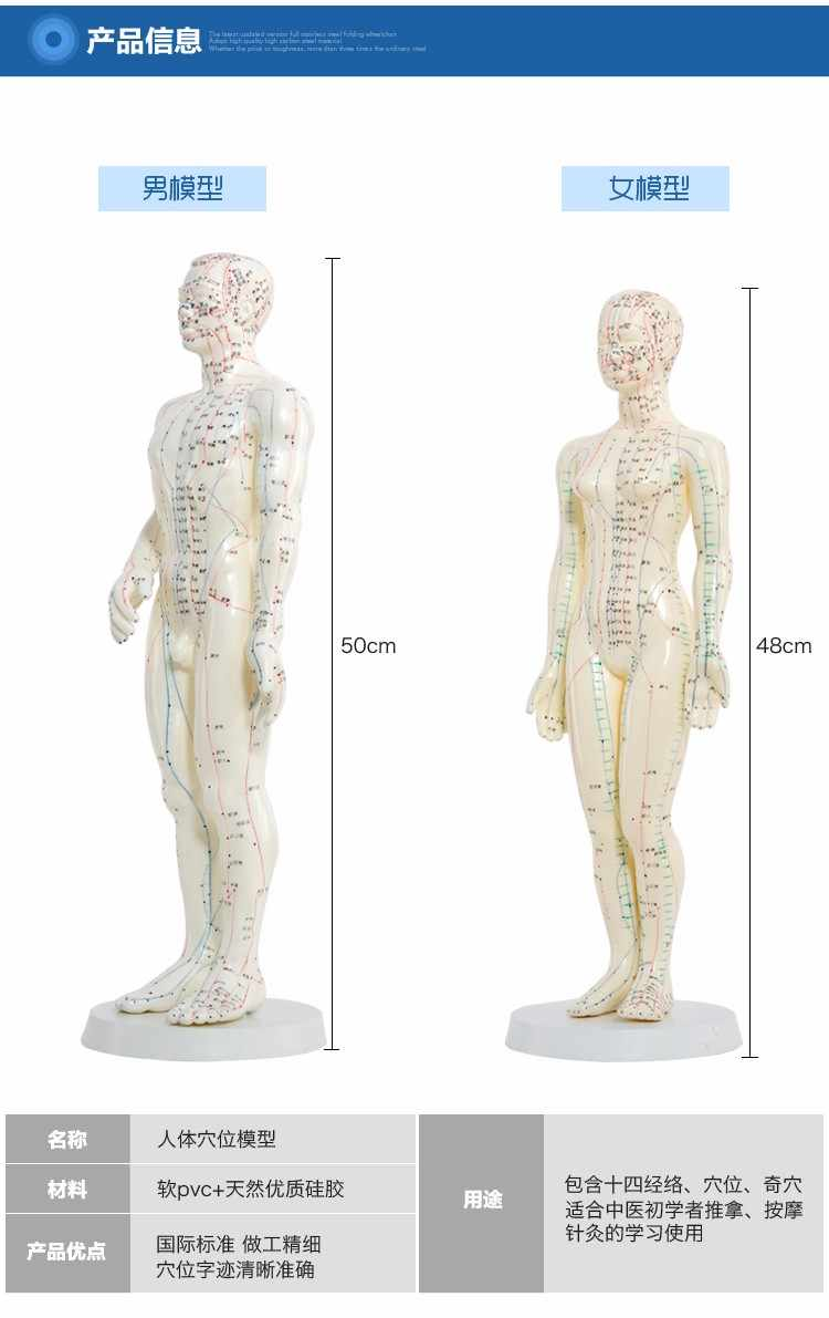 Meridian English- Chinese model human acupuncture point human body model 50cm male or 48cm female in Chinese free shipping