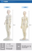 Meridian English Chinese Model Human Acupuncture Point Human Body Model 50cm Male Or 48cm Female In