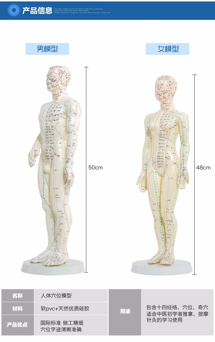 Meridian English Chinese model human acupuncture point human body model 50cm male or 48cm female in Chinese free shipping