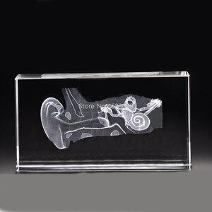 Image 1 - 3D Stereoskopik kristal iç oyma insan kulak Anatomik modeli Tıbbi öğretim malzemeleri veya Ideal hediye 40x60 x 100mm