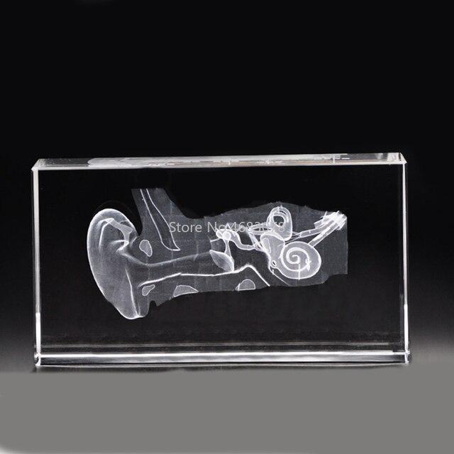 3D Stereoskopik kristal iç oyma insan kulak Anatomik modeli Tıbbi öğretim malzemeleri veya Ideal hediye 40x60 x 100mm