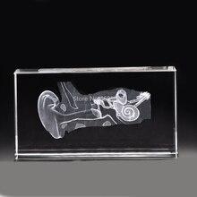 Oreille humaine en cristal stéréoscopique, sculpture intérieure, modèle anatomique, pour fournitures denseignement médical ou cadeau idéal, 40x60x100mm