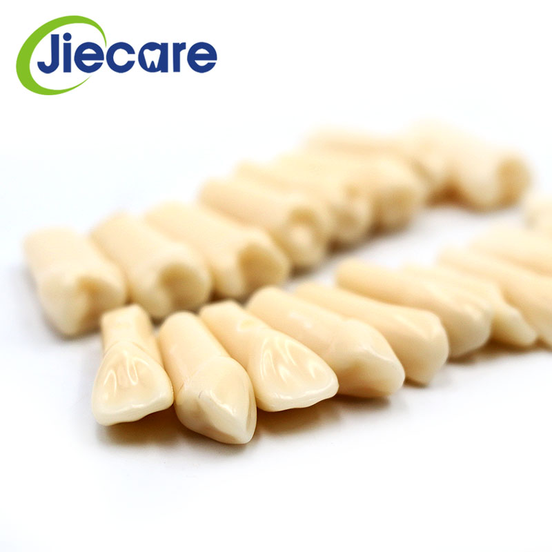 28 PCS / Bag High Quality Resin Simulation Tooth Grain Dental Model For Dentist Exam Preparation Teaching Free Shipping
