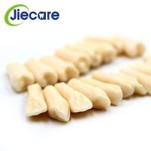 28 PCS / Bag High Quality Resin Simulation Tooth Grain Dental Model For Dentist Exam Preparation Teaching Free Shipping