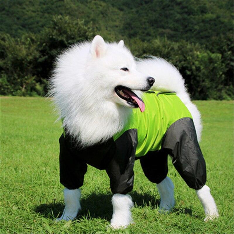 Dogs Husky Labrador