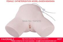 MEDICAL TRAINING FEMALE URETHRAL CATHETERIZATION MODEL,HUMAN MEDICAL NURSING MODEL FEMALE CATHETERIZATION MODEL-GASEN-NSM0040