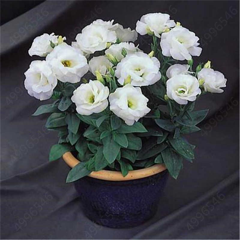 عرض ساخن 2019! 100 قطعة قزم يوستوما bonsais ربيع البذر الخريف bonsais زهور داخلية شرفة بوعاء الزفاف الديكور