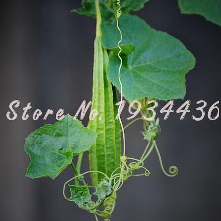 Serpente semi di piante acquista a poco prezzo serpente for Piante a poco prezzo