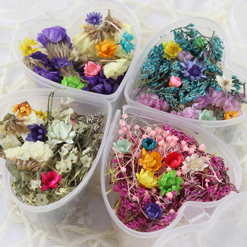 12 Colors Box Nail Art Dried Flower Decoration Diy Real Preserved Flowers Tips Deco