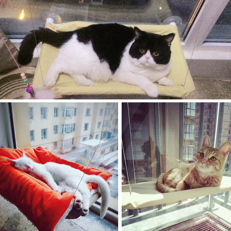 buy basking window mounted cat bed hammock sofa mat lounger perch cushion hanging shelf seat with suction cup for ferret chinchilla from