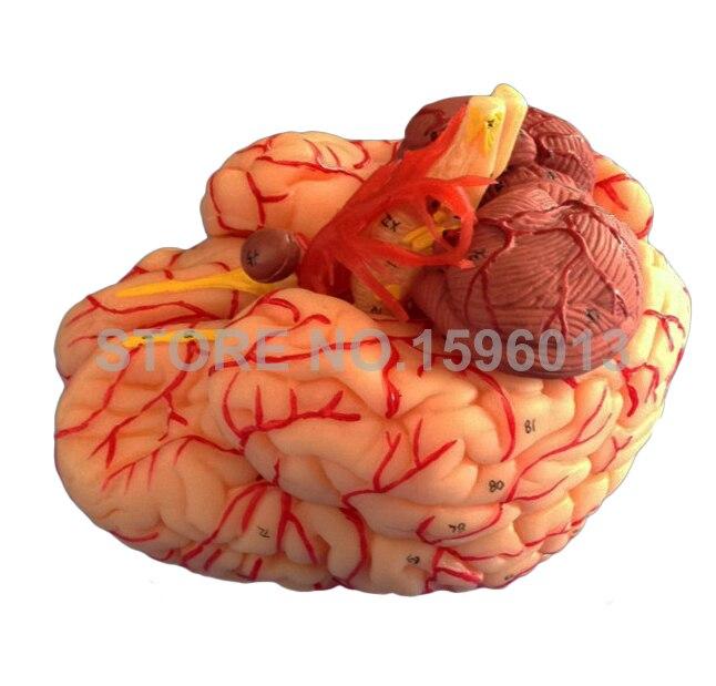 9 – ნაწილიანი ტვინის - სასკოლო და სასწავლო მასალები - ფოტო 4