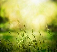 Digital personalizado Primavera photobackground verde natural scenic estúdio backdrops, fantasia fundo de vinil pano de fundo do bebê crianças