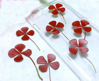 Dyed Green Clover Specimens DIY Handmade Material Dried Flower 1 Lot 100pcs Press Flower Free Shipment