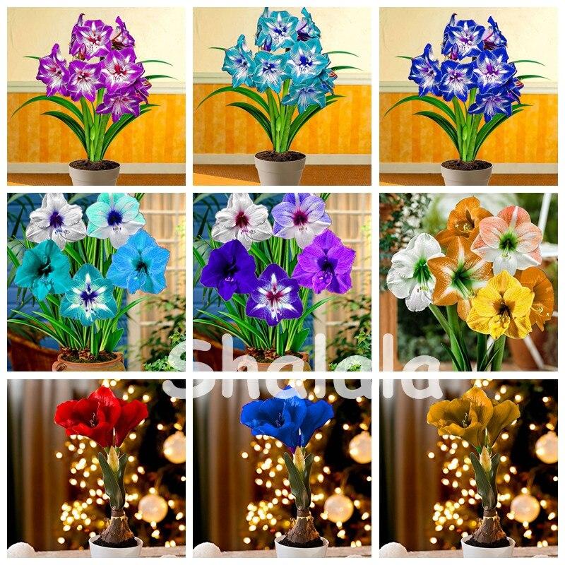Горячая Распродажа 200 шт./сумка амариллис бонсай цветок, Barbados Lily цветочный горшок завод, Гиппеаструм бонсай для дома и сада легко выращивать