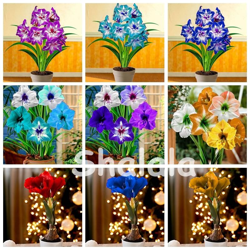 Hot Sale 200 pcs / bag Amaryllis bonsai blomst, Barbados Lily blomsterkrukkeanlegg, Gippeastrum bonsai hjem og hage lett å dyrke