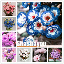 Free Shipping 100 Pcs Hybrid Eustoma Flower Favorites of Butterflies & Useful Bees Rich Aroma Bonsai Plant Flower for Garden(China)