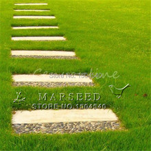 1000 pcs lawn Seeds Tall Fescue Grass  Low Maintenance,ideal lawn DIY your garden Perennial plant
