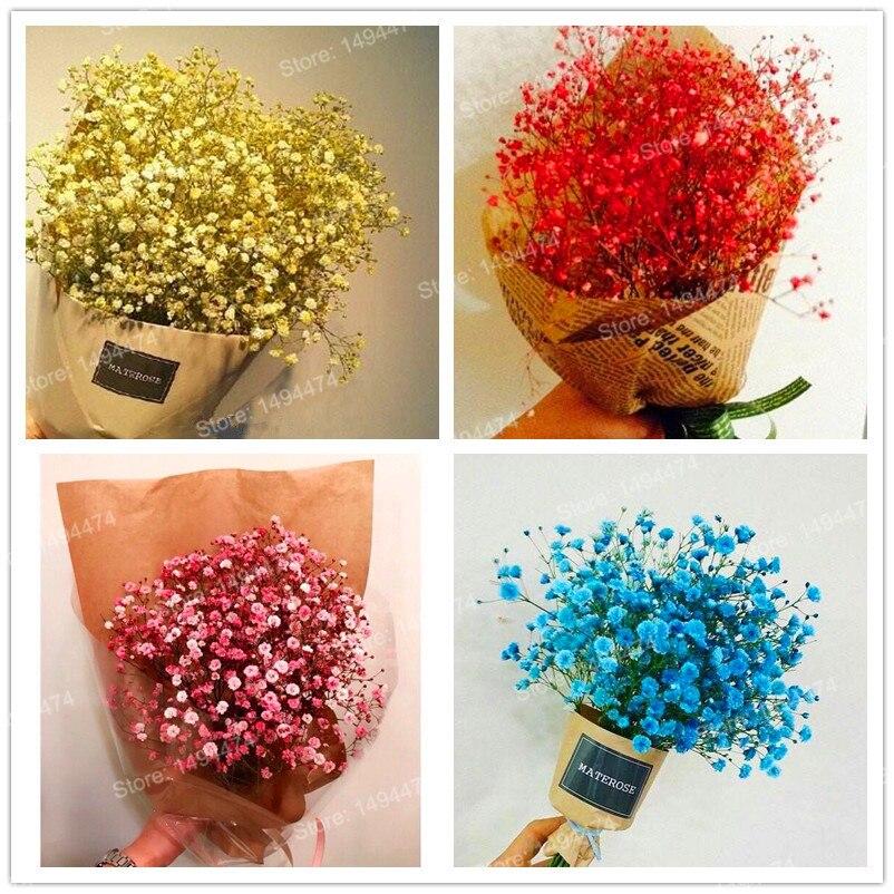 400pcsbag mixed color babys breath graceful gypsophila seeds gypsophila paniculata flower seeds beautiful bonsai