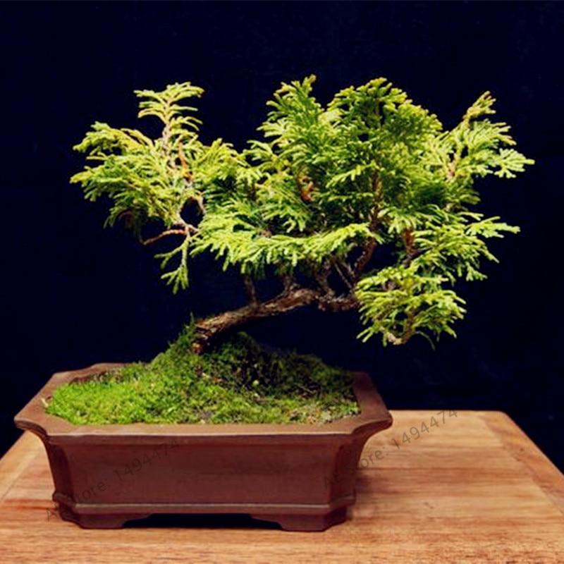 Plantes Pour Jardin Japonais Miniature. Beautiful Elegant Fabuleux ...
