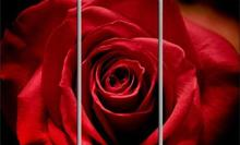 3 pieces framed Wall Art Picture Gift Home Decoration Canvas Print painting Red roses wholesale/