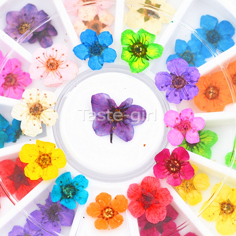 12 Colors Real Natural Petal Dried Dry Flower Tips 3D Nail Art Wheel Decoration Nail Jewelry For UV Gel beauty Manicure Tools 120 180 colors professional manicure salon nail art uv gel polish tips card display board book chart palette 3 colors