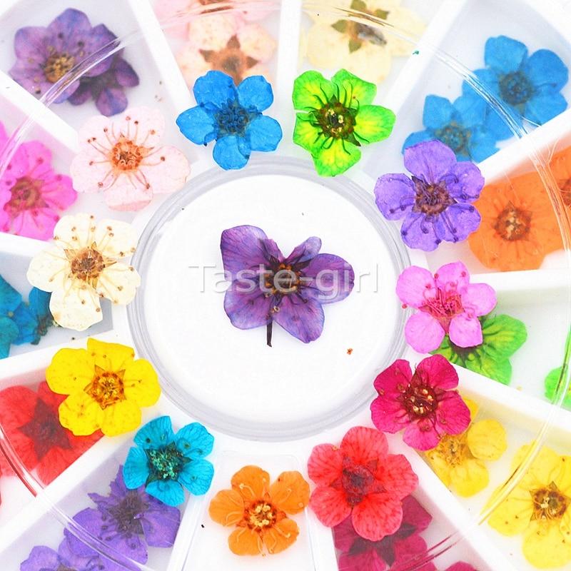 12 цветов настоящие натуральные Лепестковые сухие цветочные Типсы 3D колесо для дизайна ногтей украшение для ногтей для УФ-геля инструменты ...