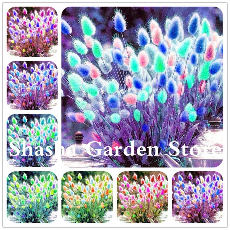 bonsai 2018 new 200 pcs  pack blue tails grass perennial hardy ornamental beautiful grass flower