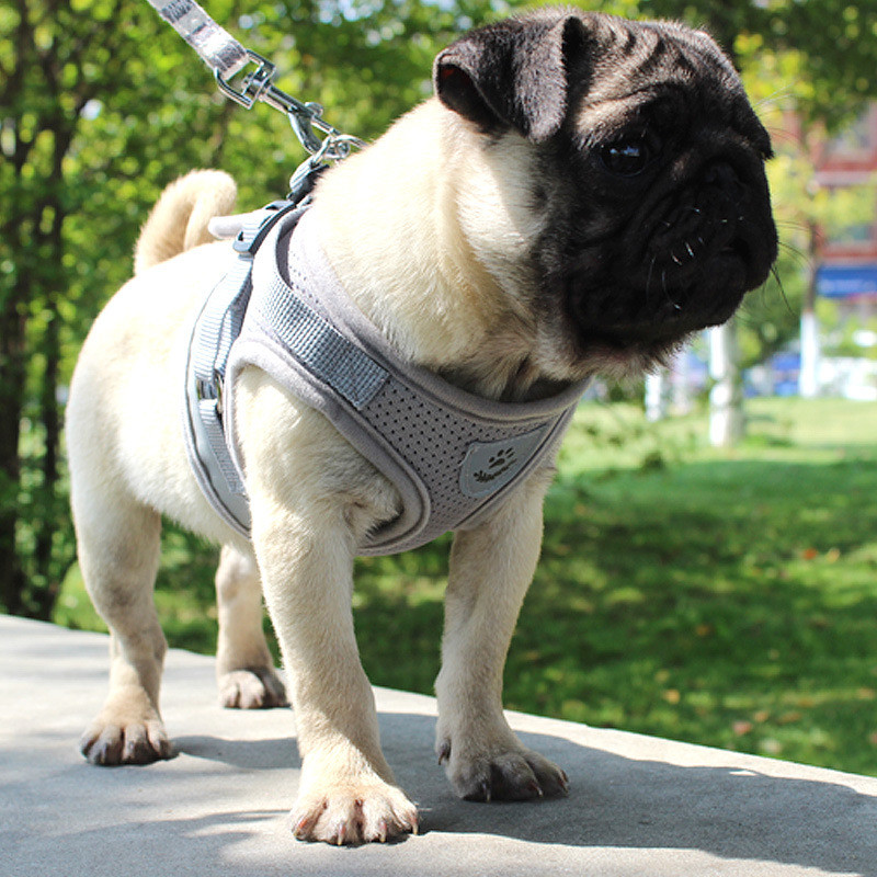 small dog harness (14)