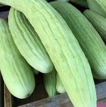 20 Pcs Armenia cucumber seeds Heirloom Not Bitter Non GMO