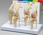 Canine Osteoarthriti...