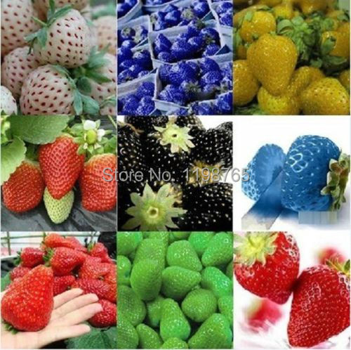 100pcs 2016 New Rare 10 Colors Super Sweet Giant Strawberry Seeds Potted flowers Berry Seeds fruit seed