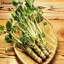 купить 100 pcs Wasabi plants Japanese Horseradish Vegetable Bonsai Plant DIY Home Garden Plants дешево