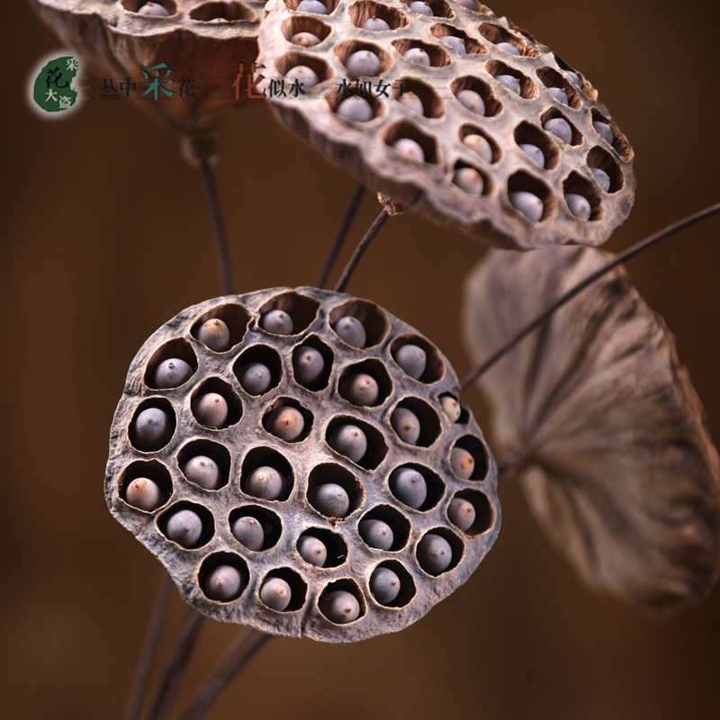 flor decor - Flor Decor