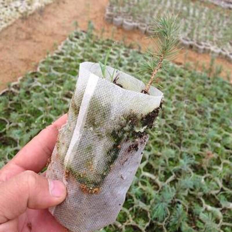 100PCS/PACK Planters Nursery Pots Bags 8*10cm Fabrics Garden Supplies Plant Tool Bag