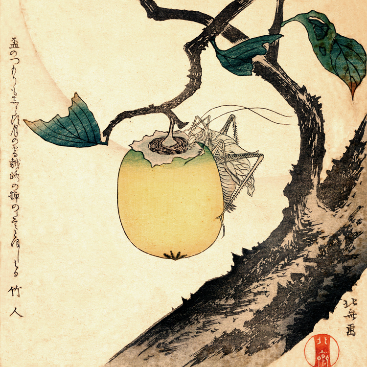 Vintage poster scenery canvas painting picture Japan traditional art Moon Persimmon and Grasshopper 1807 By Katsushika Hokusai