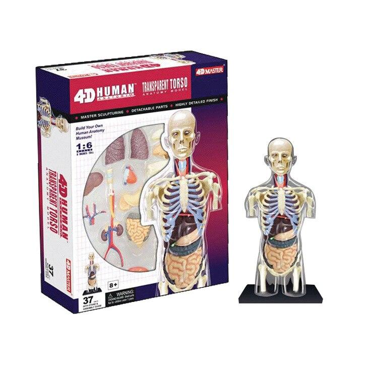 Aliexpress Buy Educational Assembled 4d Human Body Transparent
