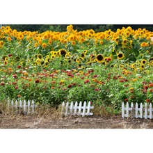 Laeacco Spring Backdrops Sunflowers Garden Wooden Fence Grass Natural Scenic Photographic Backgrounds For Photo Studio