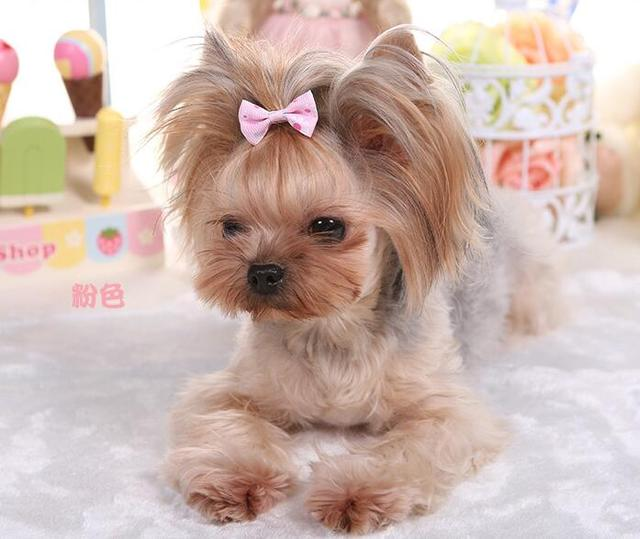 10pcs Yorkshire Terrier And Poodle Hair Accessories Pet Grooming
