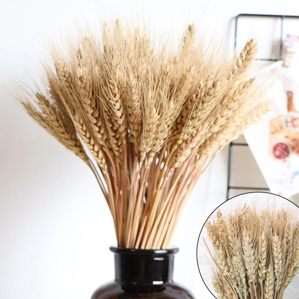 Dried Wheat Bouquet Flowers Natural Stems Bunch Sheaves For Home Wedding Showcase Kitchen Decorations Photography Props in Artificial Dried Flowers from Home Garden