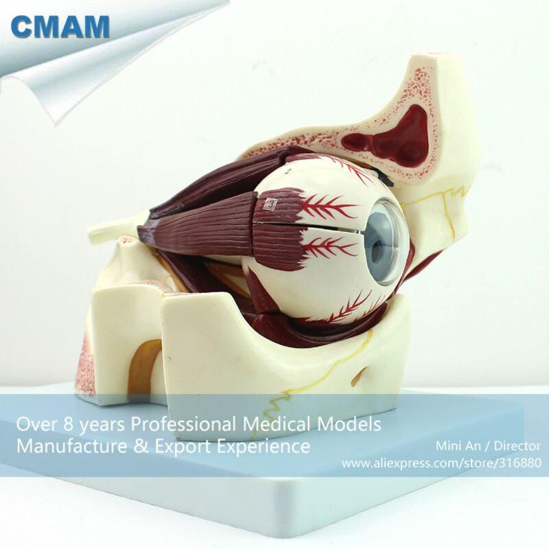 12527 CMAM-EYE03 Medical Anatomy Model 10-Parts 3x Life S ize Eye with Orbit Model цена и фото